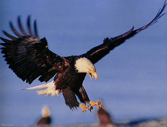 the eagle landing by - photo #35